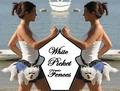 Portrait of White Picket Fences